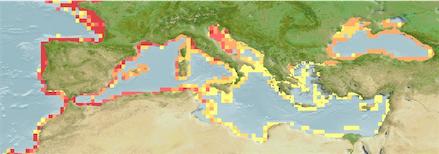 Dicentrarchus Labrax Distribution Map