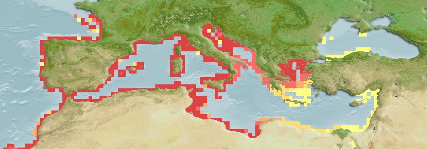 Lichia Amia Mediterranean Distribution Map