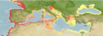 Mugil Cephalus (Flathead Mullet) Distribution Map