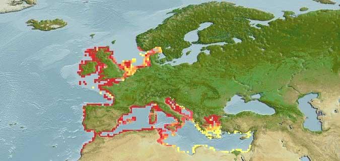 Parablennius Gattorugine Distribution Map
