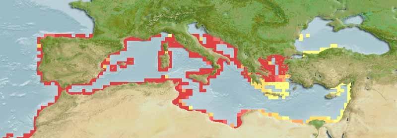 Saddled Sea Bream – Oblada Melanura - Distribution Map