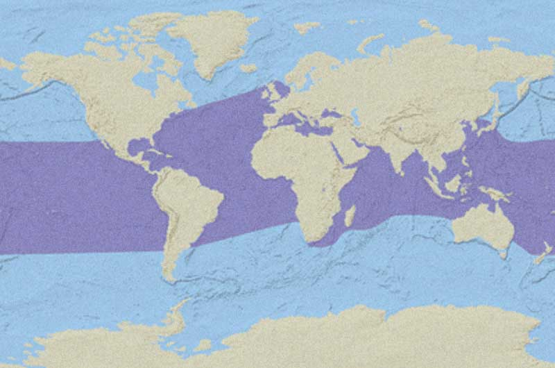 Green Sea Turtle Distribution Map