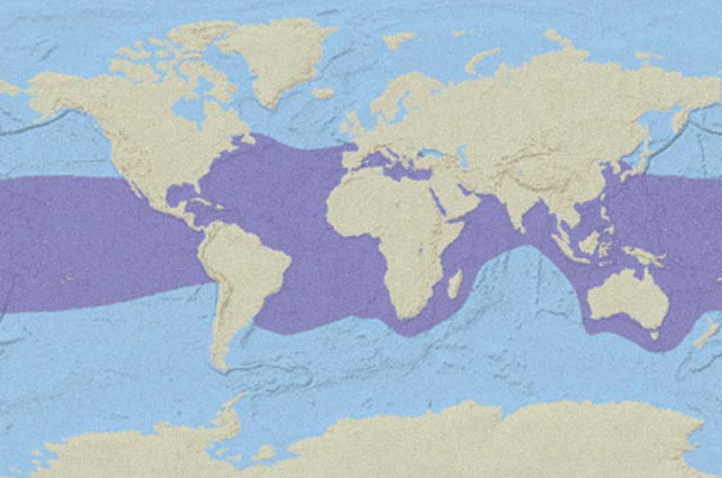 Hawksbill Sea Turtle Distribution Map