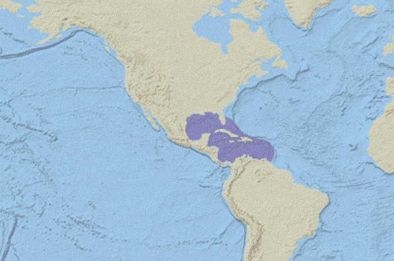 Kemp's Ridley Sea Turtle Distribution Map