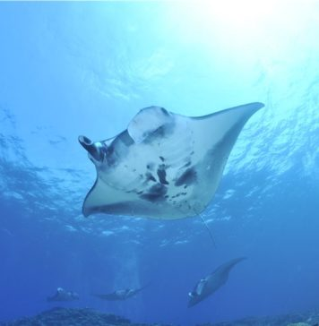 Sea Ray