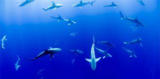 Shark School