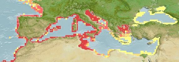 Barracuda Sphyraena Sphyraena Distribution Map