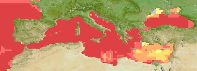 Mediterranean Horse Mackerel - Trachurus Mediterraneus - Distribution Map