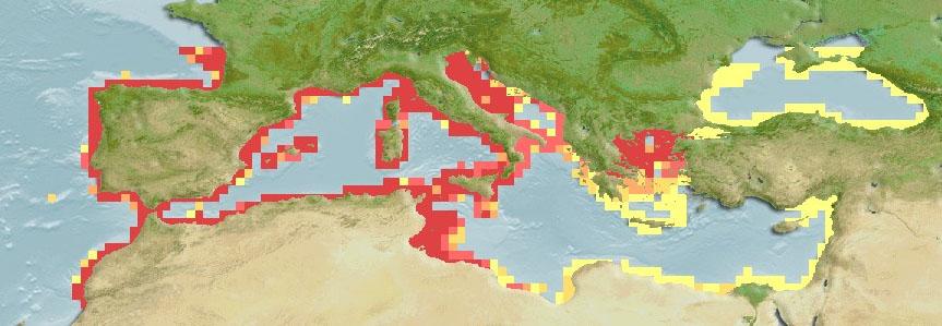 Umbrina Cirrosa Distribution Map Mediterranean Sea