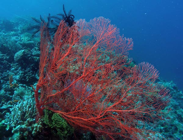 WeHeartDiving_Scuba_Diving0475_n