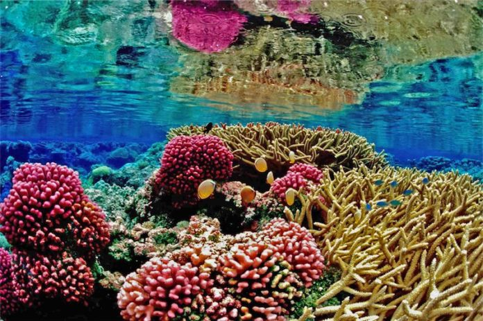 Coral Reef Facts