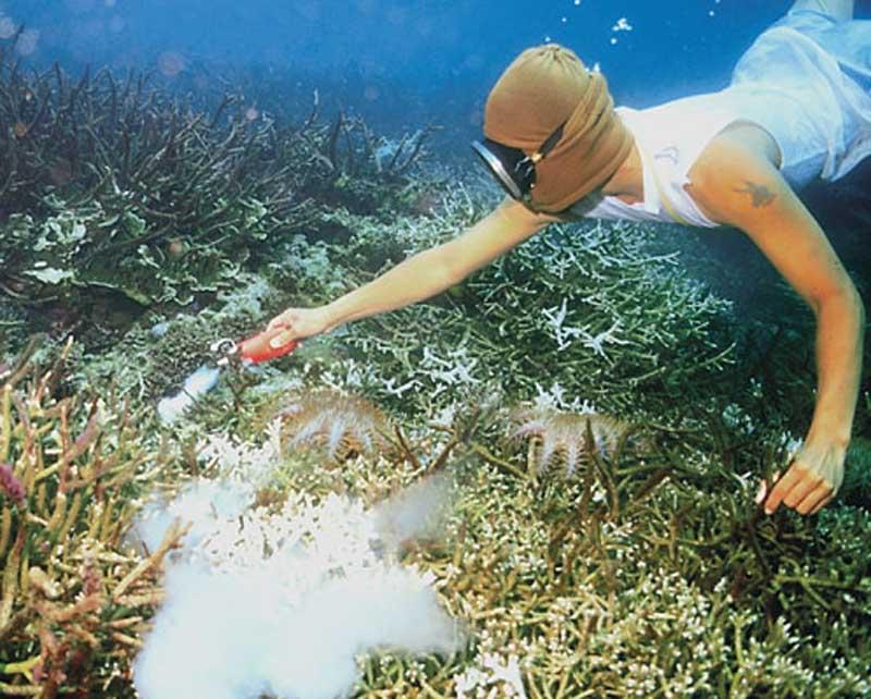 cyanide fishing reef destroyed