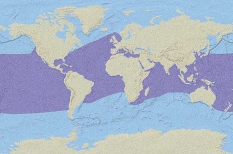 Loggerhead Sea Turtle Distribution Map