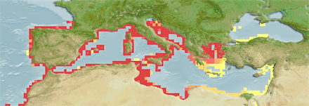Salpa Salpa Distribution Map