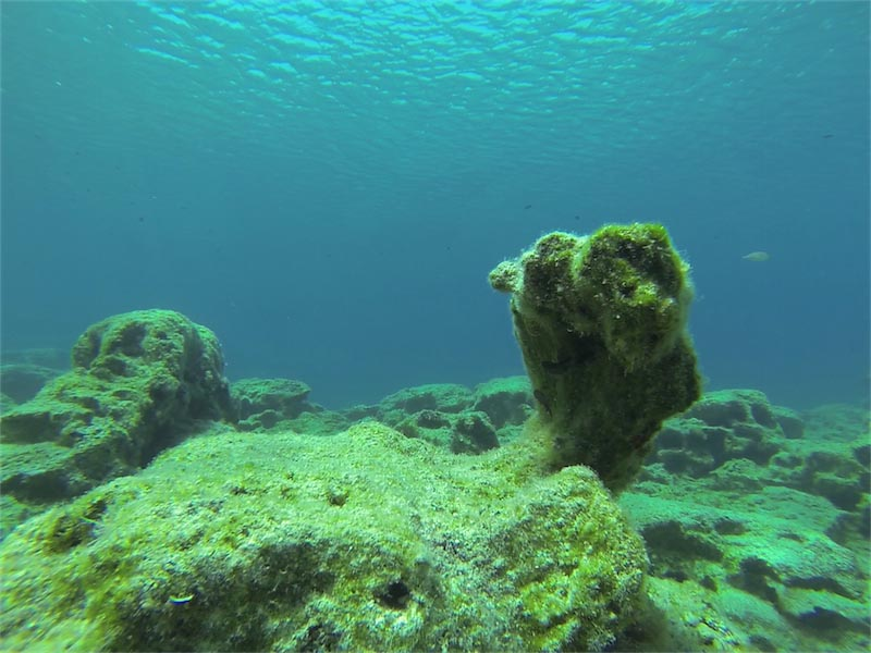 Pirate's Cove Dive Site