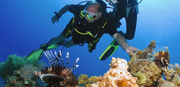 Never Touch Anything! Protect Coral Reefs!
